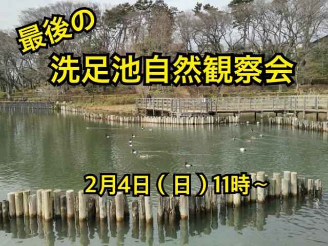 洗足池自然観察会